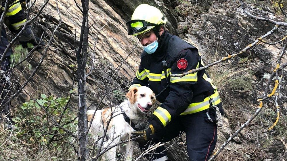 Mardi matin, les pompiers de Sion sont venus en aide à Luna.