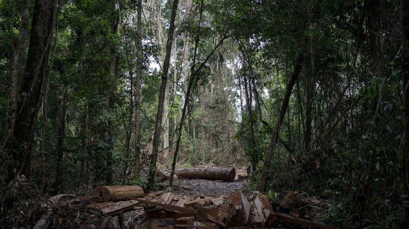 Environnement: près de 40% de la forêt amazonienne risque de devenir savane