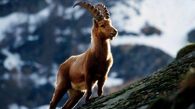 Jacques Melly s'explique sur les affaires de chasse en Valais