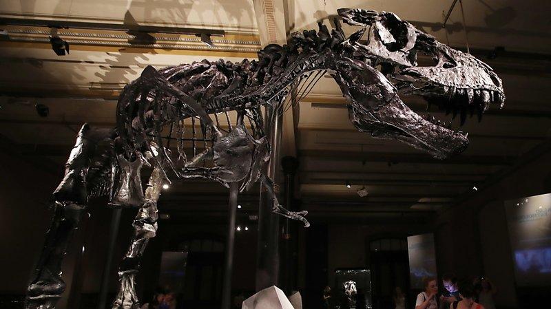 Paléontologie: un T-Rex vendu 31,8 millions de dollars, record pour un dinosaure