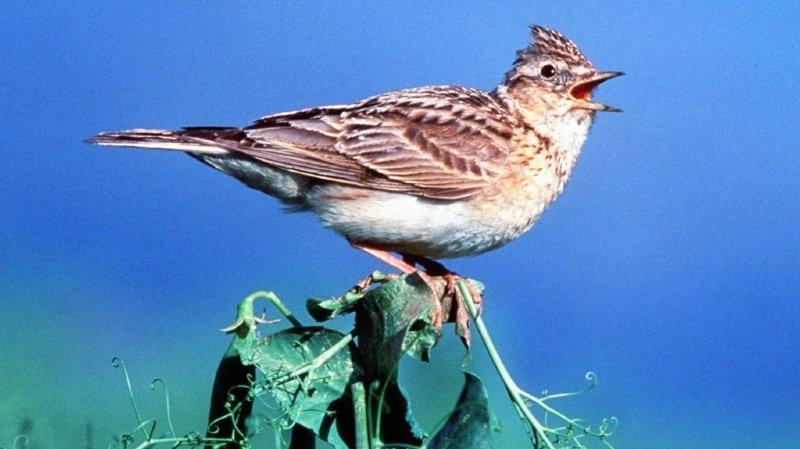 Biodiversité: en Europe, le nombre d'habitats naturels en mauvais état dépasse les 80%