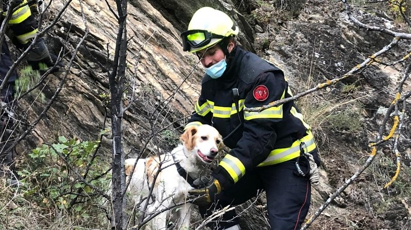 Luna ou la belle histoire d'une chienne fugueuse sauvée par les pompiers de Sion