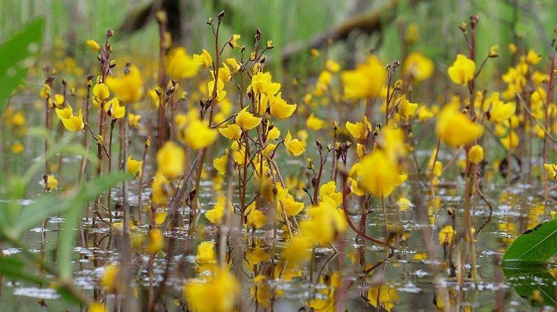 Environnement: les fleurs s'adaptent au changement climatique en changeant de couleur