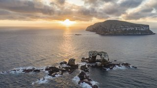 Galápagos: population de pingouins et de cormorans en hausse