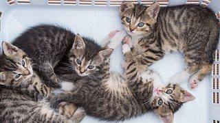 Le Valais veut s'attaquer au problème des chats errants
