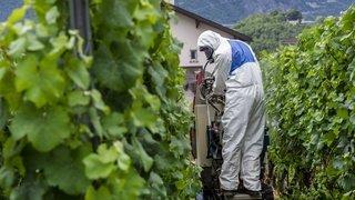 Pesticides et riverains: quatre parlementaires valaisans interpellent le Conseil fédéral