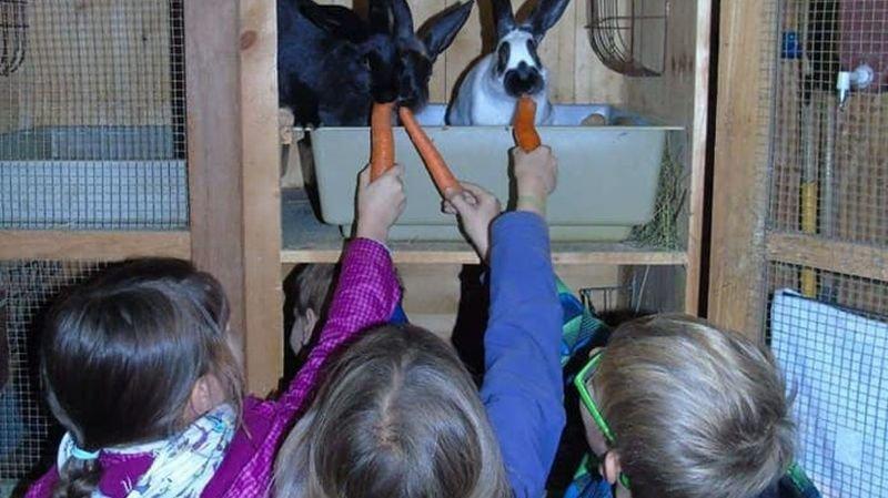 Des expériences inoubliables pour les enfants à la ferme des Planches.