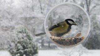 L'hiver arrive: nourrir les oiseaux, oui, mais pas n'importe comment