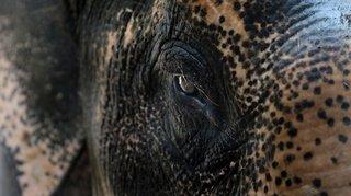 Opération monstre pour sauver un éléphant tombé dans un puits en Inde