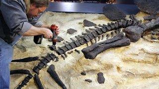 Paléontologie: avant de disparaître, les ptérosaures dominaient le ciel