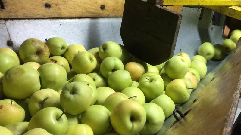 1000 litres de jus de pommes ont été produits.