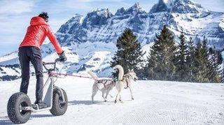 Valais: découvrir les joies de l'hiver en compagnie d'animaux