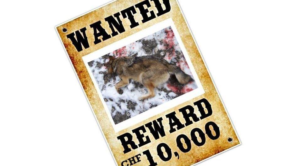 Groupe Loup Suisse propose 10 000 francs à toute personne offrant des informations sur le tir du louveteau à Torgon.