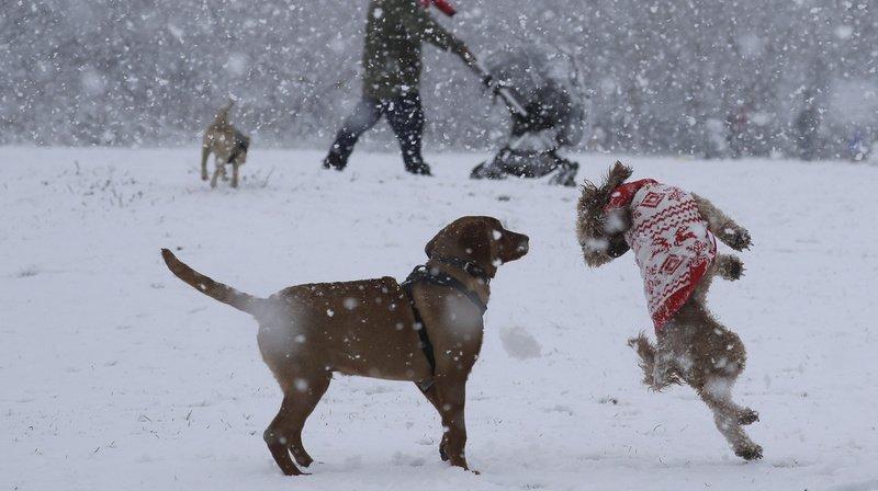 Animaux: les chiens jouent aussi pour faire plaisir à leur maître
