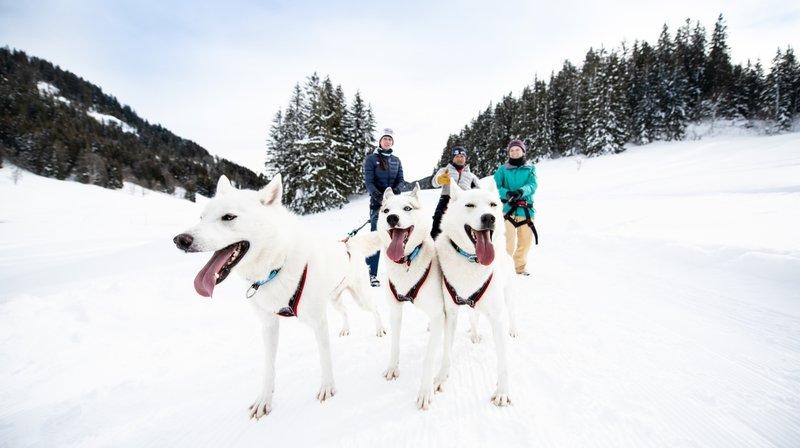 Une sortie avec des huskies, une activité originale pour la Saint-Valentin.