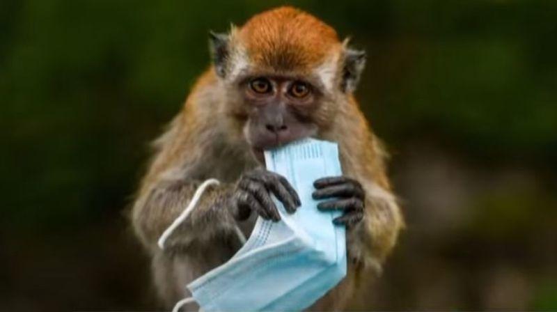 Les animaux mis en danger par les masques usagés