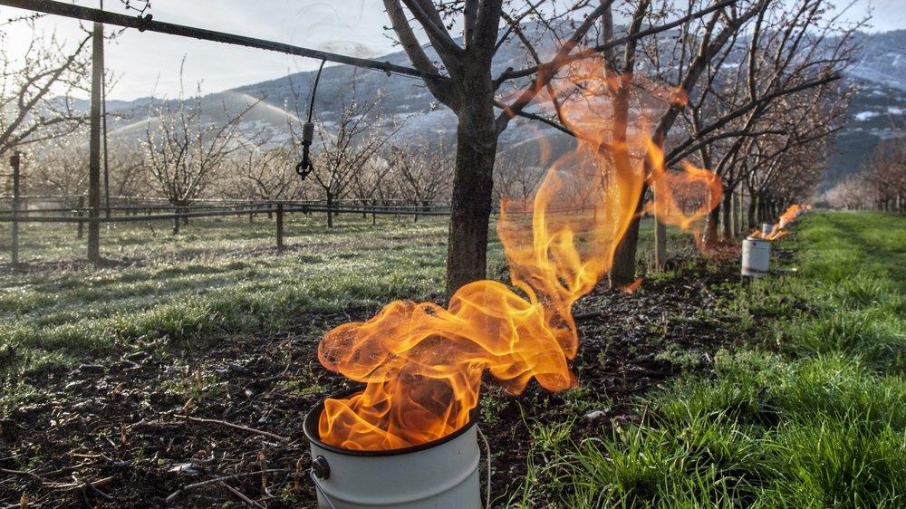 Les arboriculteurs valaisans se préparent à lutter contre le gel annoncé. Les bougies à la paraffine sont régulièrement utilisées.