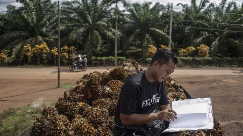 L'huile de palme cristallise les débats sur l'accord de libre-échange.