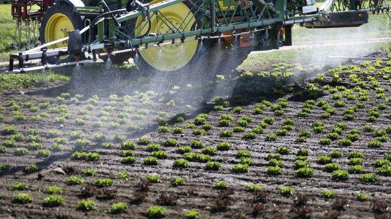 Initiatives anti-pesticides: deux «projets extrêmes» et néfastes