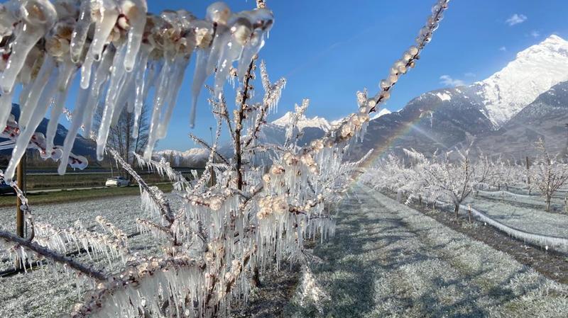 Pour les arboriculteurs valaisans, le combat contre le gel débute