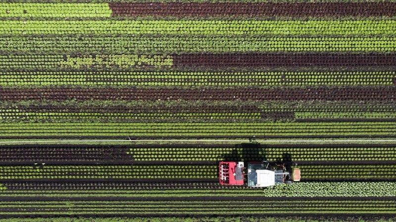 Initiatives anti-pesticides: le camp bourgeois opposé, les paysans et les scientifiques partagés
