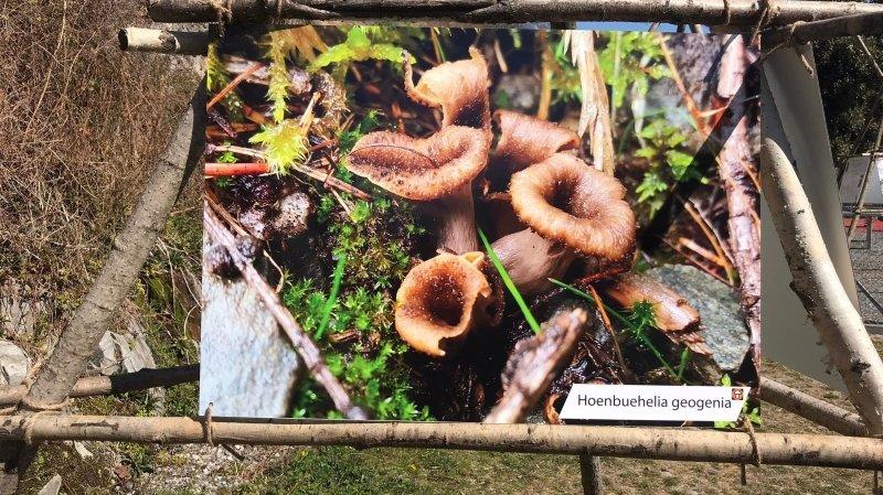 Fully: les champignons tiennent la vedette le long du canal
