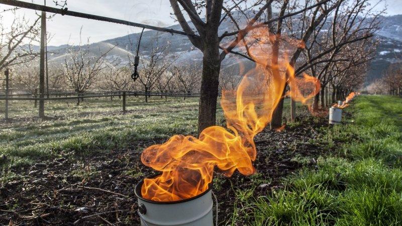 En Valais, les arboriculteurs se préparent à affronter le gel