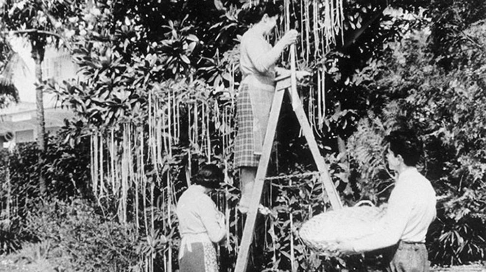En 1957, la BBC diffuse un reportage sur les arbres à spaghettis cultivés au Tessin.