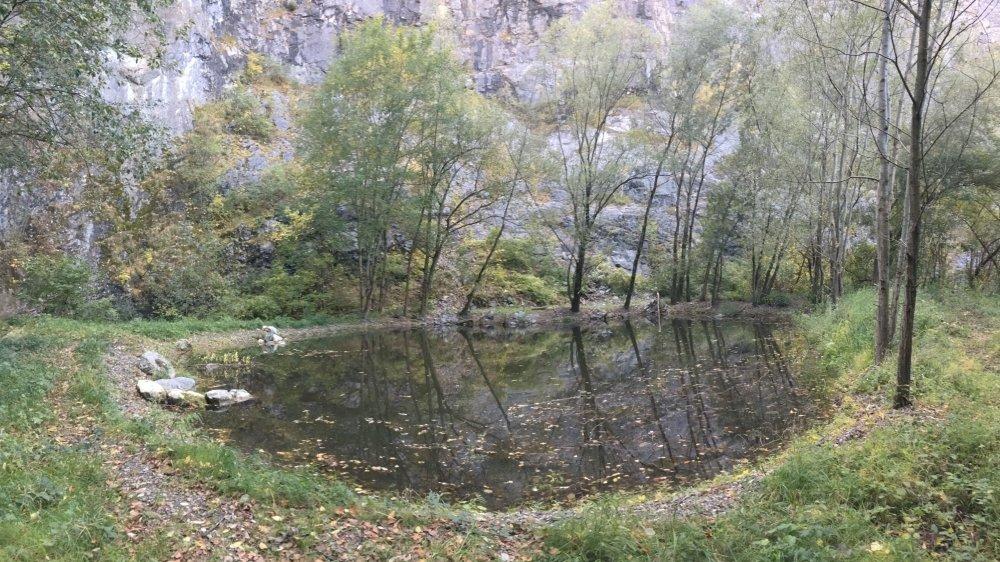 Le site de reproduction de batraciens de Malévoz est considéré comme l'un des plus riches en espèces du Valais.