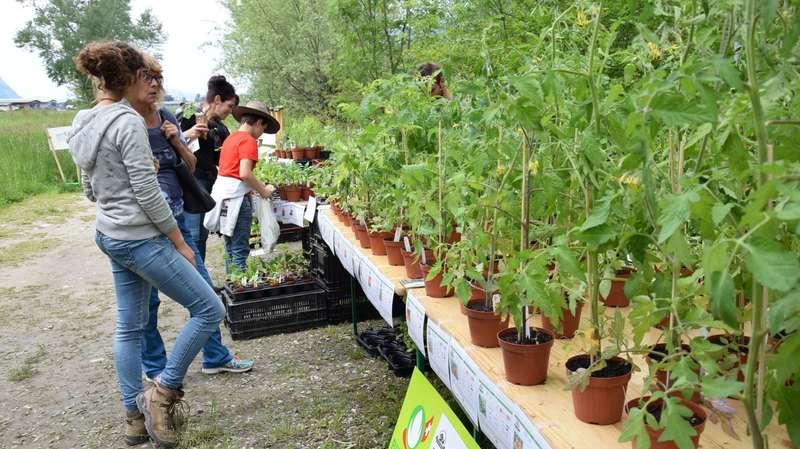 Monthey et Collombey-Muraz fêtent ensemble la durabilité