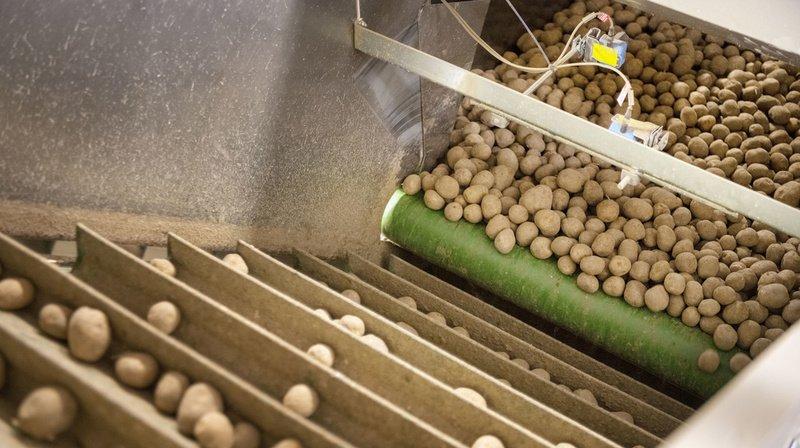 Coronavirus: la Suisse importe davantage de pommes de terre