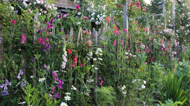 Quand les fleurs annuelles prennent d'assaut le jardin…