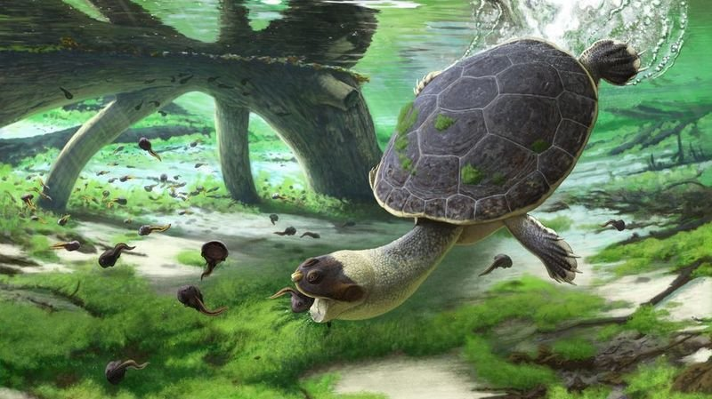Découverte à Madagascar d'un fossile de tortue unique en son genre