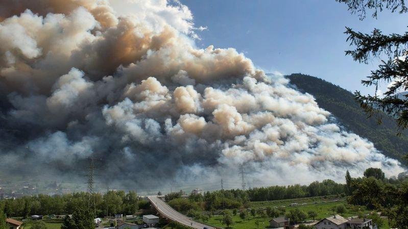 Viège: la forêt s'est bien remise de l'incendie de 2011