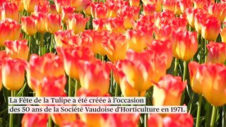 50e bis Fête de la tulipe à Morges (VD)