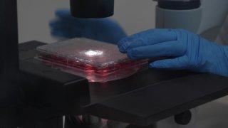 Berne: des chercheurs infectent des cellules humaines avec le coronavirus