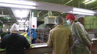 Guy Parmelin visite une fabrique de cornichons