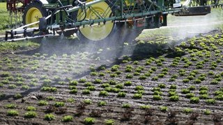 Initiative sur les pesticides de synthèse: les petits paysans sont pour