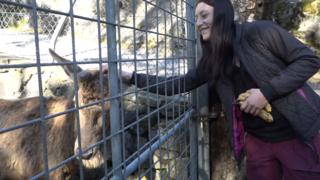 Au zoo des Marécottes, les soigneurs toujours au service des animaux malgré le Covid