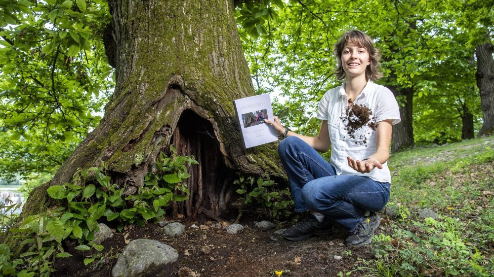 Elina Sauvain a analysé plusieurs cavités à terreau de la châtaigneraie de Fully.