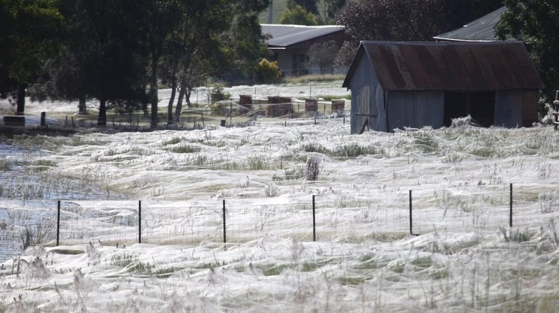 Une mer de soie a envahi la région du Gippsland, dans le sud-est de l'Australie.
