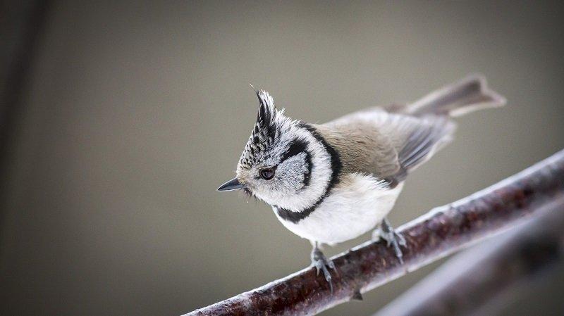 Sortie au chant des oiseaux