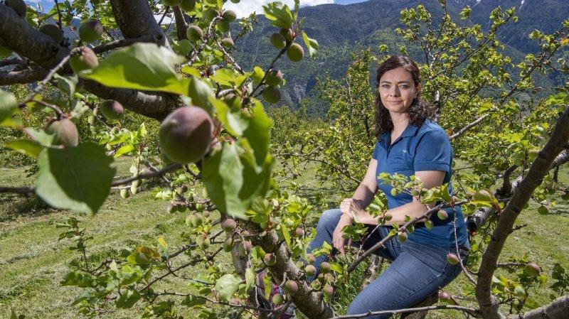 Initiatives anti-pesticides: ces agriculteurs valaisans qui se sentent pris pour cibles