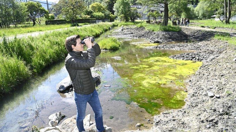 Des mesures compensatoires ont déjà été réalisées comme ici, autour du canal de la Lantze, à Vernayaz. Chargé d'affaires à Pro Natura Valais, Jérémy Savioz en observe les effets sur le terrain.