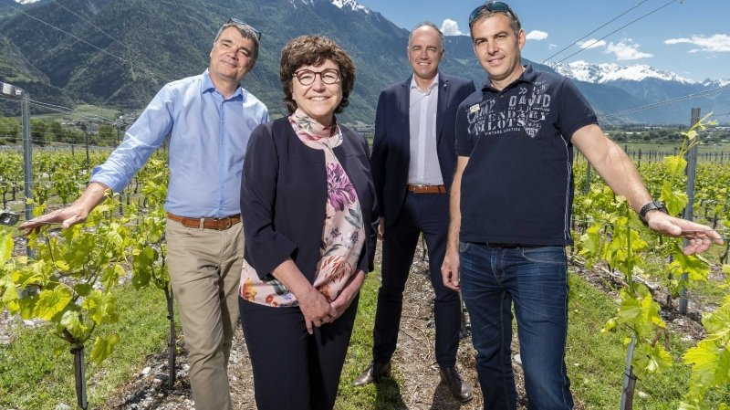 Valais: une nouvelle station d'essai au Grand-Brûlé pour penser les vins du futur