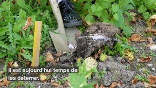 Agroscope va analyser les slips enterrés en avril