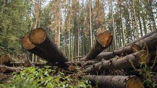 Conseil national: les Valaisans veulent une filière bois en Suisse