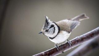 Sentier des oiseaux : Exposition photos