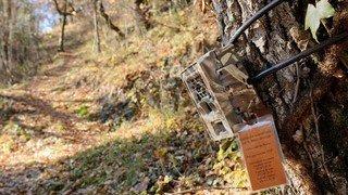 Loupen Valais: deux jeunes agriculteurs volaient des pièges photographiques