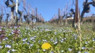 Quelles mesures l'Etat du Valais a déjà prises pour utiliser moins de pesticides?
